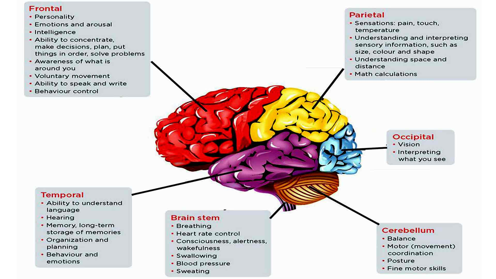 Brain region function changes in pathological states ...